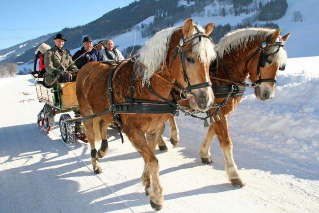 Pferdeschlittefahrten - Winterurlaub in der Region Schladming-Dachstein